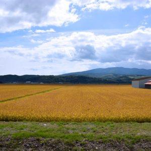 Agraria